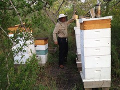 Checking the other hives
