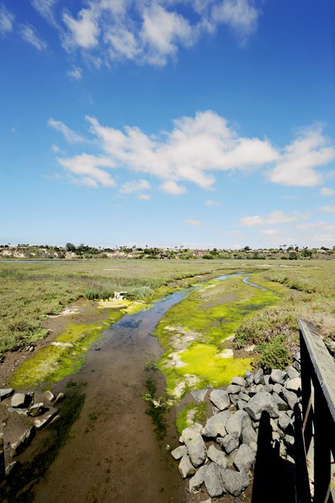052712_newport_landscape11