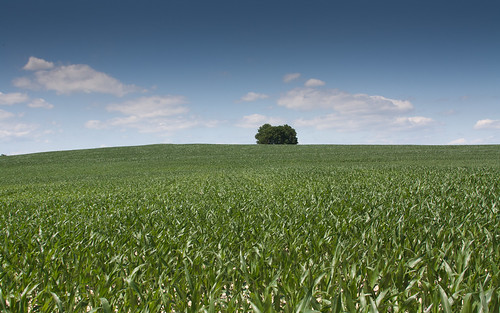 Corn, Trees and Sky by matneym