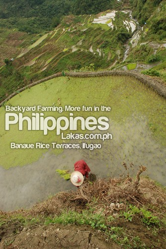 Backyard Farming. More fun in the Philippines