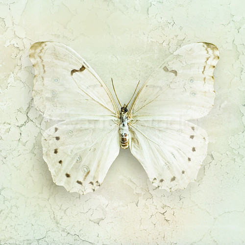 Butterfly Chic - Photography wall art