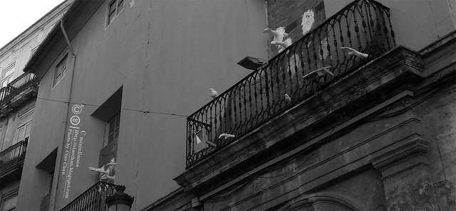 Hola Valencia~瓦倫西亞。藝術科學城 Ciudad de las Artes y las Ciencias     R1043331