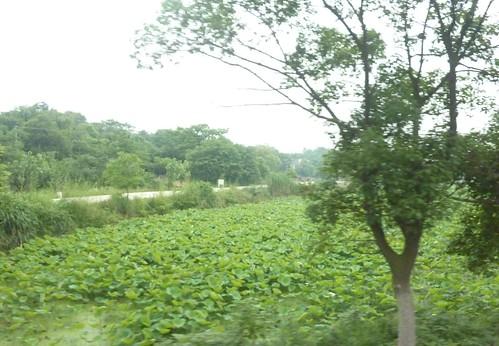C-Hunan-Route Changsha-Hengshan (29)