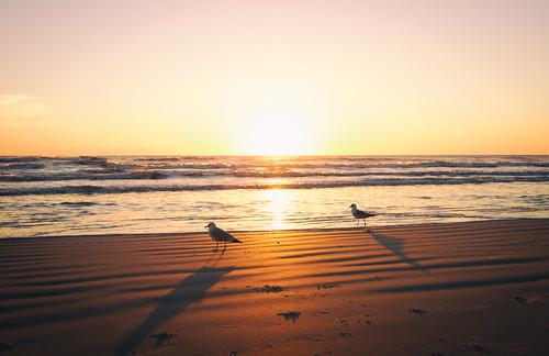 morning light beach sunrise canon sand florida 7d tamron newsmyrnabeach seaguls tamronlens canonphotography