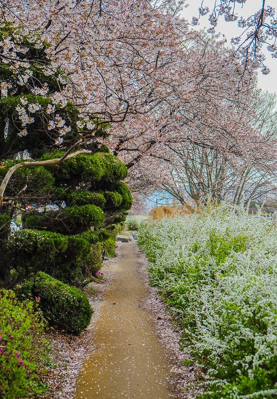 Blossoms on the Path