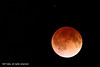 Red Moon IMG_2843A1 R by CP Images