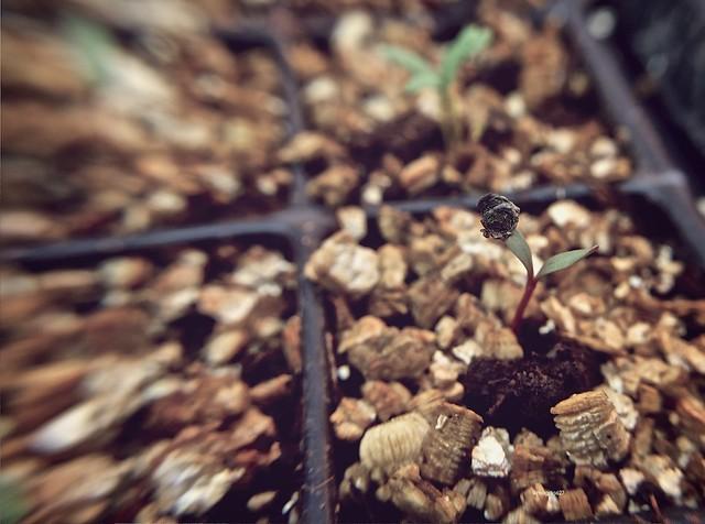 anteketborka.blogspot.com,   printemps 8