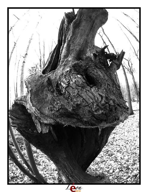 Le peuple de la forêt - Page 3 6854847804_8b32132f70_z