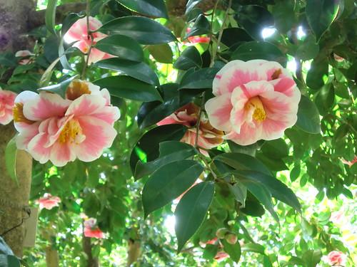 20120328小石川植物園-042
