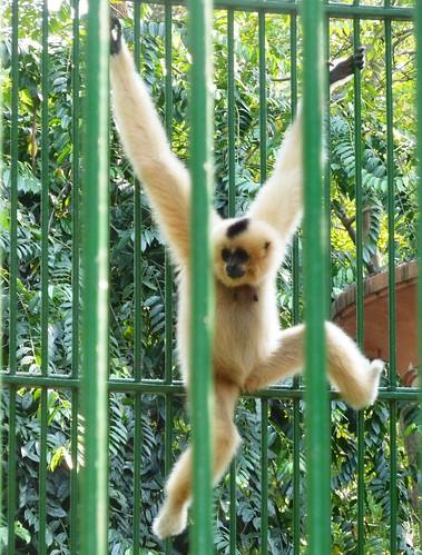 V 12-Ho Chi Minh-Jardin zoologique (12)