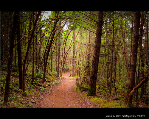 trees forest vancouverisland trail gowllandtoddprovincialpark jocelunhill