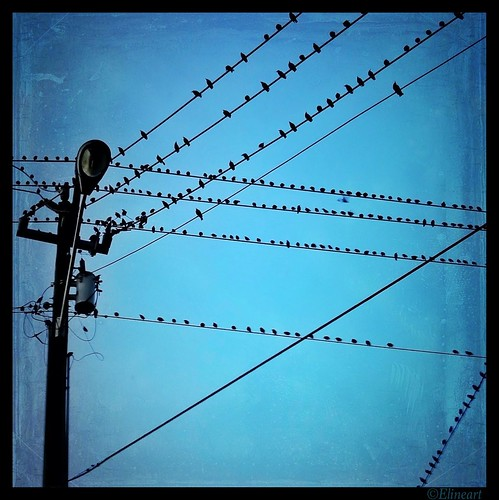 314/365- Ten wires by elineart