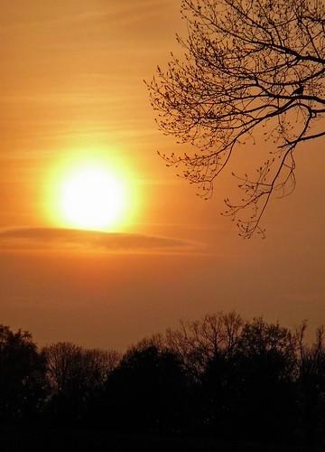 red sky sun france tree bird yellow seine jaune rouge soleil ciel et 77 arbre oiseau marne seineetmarne esbly mygearandme