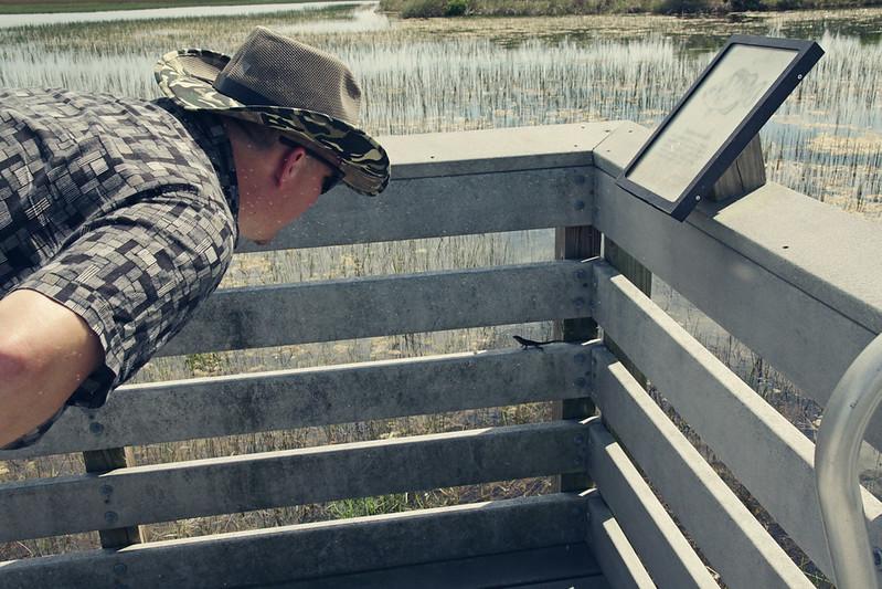 Chapel Trail lizard staredown