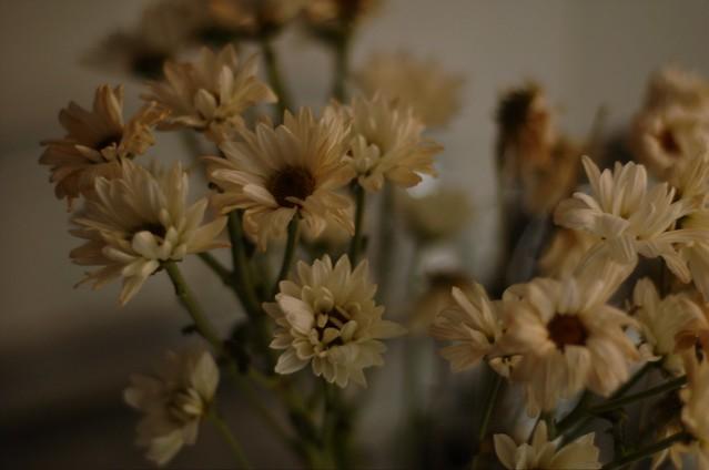 126/366: Naturaleza muerta