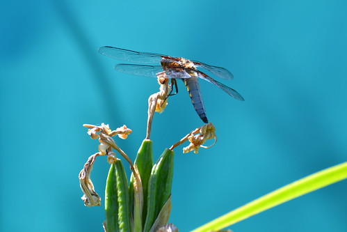 My garden is a fairy-tale world (dragonfly) by Mélys