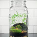 Giant Ball Jar Terrarium by joshleo