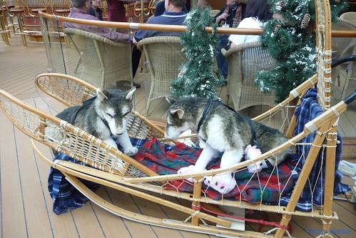 Sled dog display on Lido deck