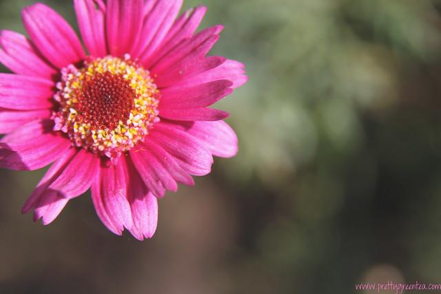 Flower prettygreentea