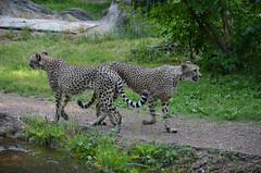 Memphis Zoo & Aquarium - Memphis, TN