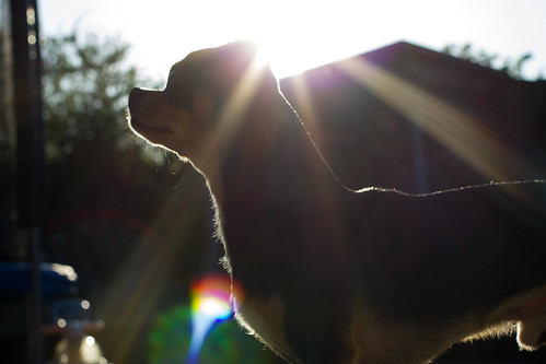 Sunny Milo by djchrischambers