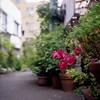 細路地の鉢植