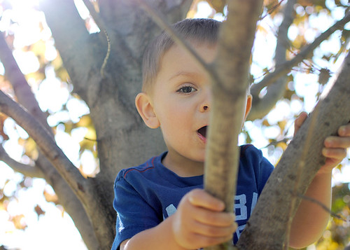 Toddler in a Tree 2