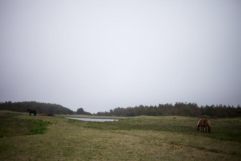青森2012 尻屋崎 寒立馬