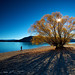 The Tree.NZ by JeroPS