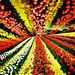 field of spring colors by Hodaka Yamamoto
