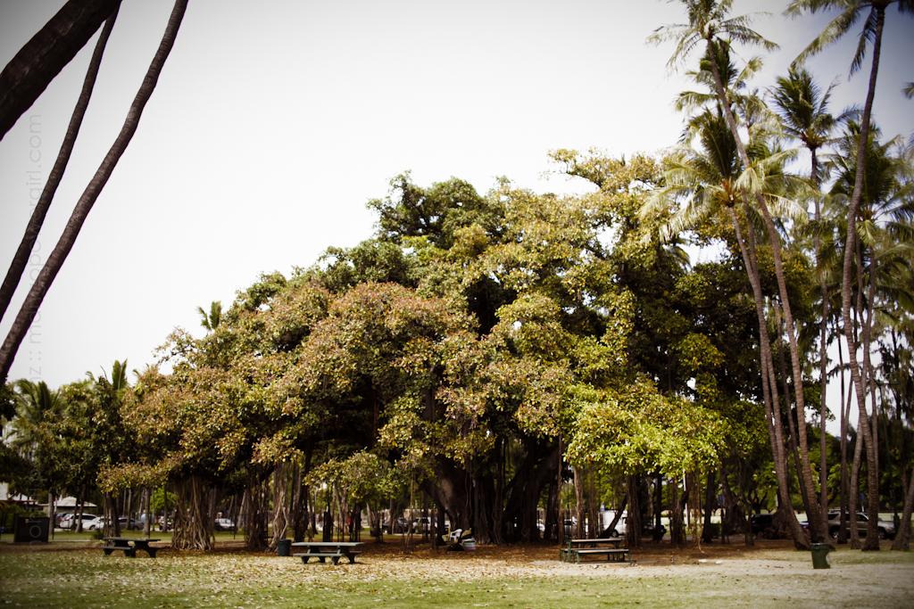 waikiki war memorial park