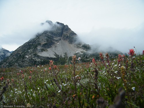 Wildflowers near Maple Pass, North Cascades National Park, Washington