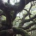 """Small photo of """"Big enough to whomp a whomping willow"""""""