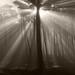 Morning Mist in the Presidio by fksr
