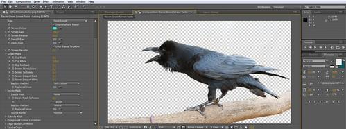 Raven Chroma 02