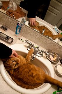 365: 2012/06/13 - basin cat