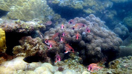 Koh Samui Chaweng Beach Snorkel サムイ島 スノーケル