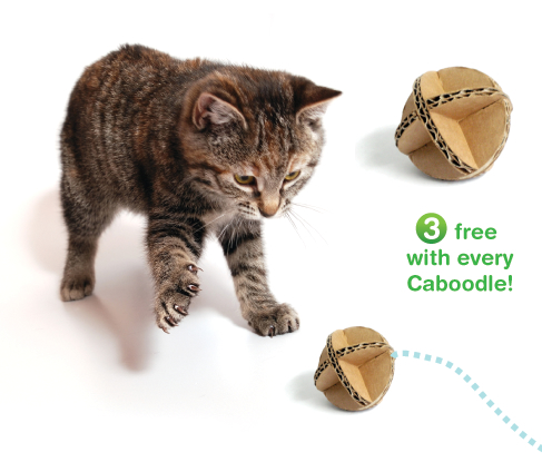 cats&cardboard_004