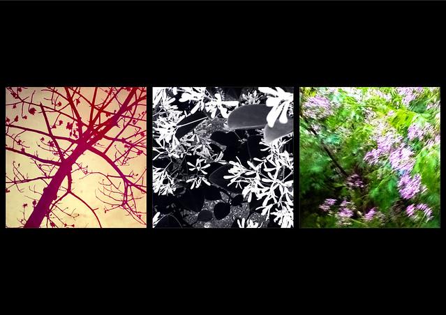20120401 大安森林公園