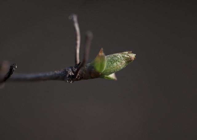 brand new leaf