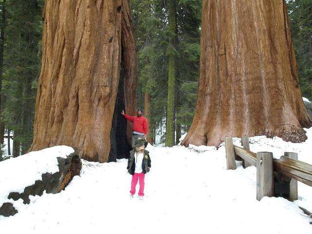 Sequoia National Park 061