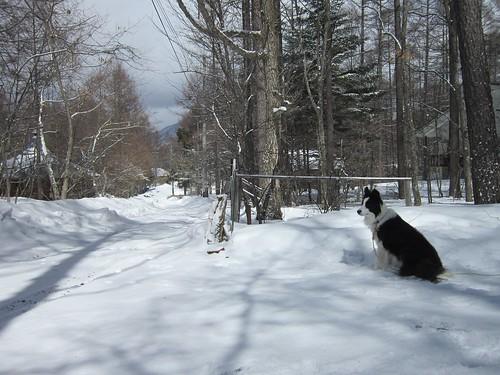 3月末の雪とランディ 2012年3月25日11:32 by Poran111