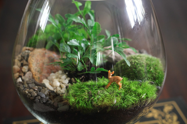 round pedestal terrarium a round pedestal terrarium made f flickr photo sharing. Black Bedroom Furniture Sets. Home Design Ideas