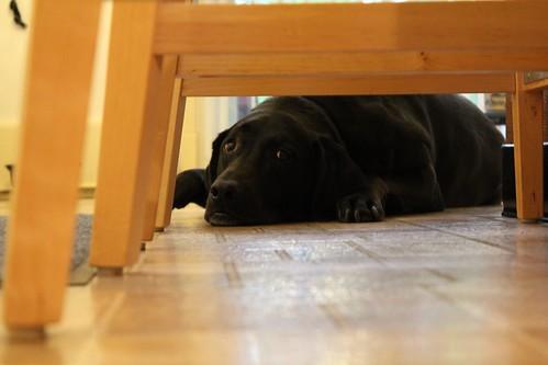 Peek-a-Boo Bailey