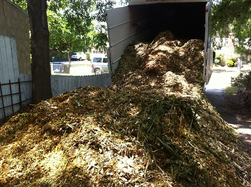 Load of wood chip from local tree service