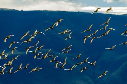 africa birds animals tanzania arusha naturelandscape