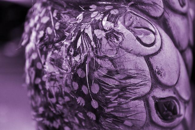 tyrian purple monocrome purple by beckyvit flickr