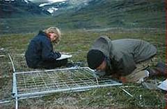哥德堡大學(University of Gothenburg)的研究人員正在標記方格中的植物。(哥德堡大學提供)