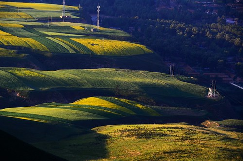 china morning light shadow sun mountain nature field sunrise pattern shine village sunny mel shade melinda 青海 rapeseed 油菜花 qinghai rapeseedfield 田 油菜花田 quilian chanmelmel 祈連