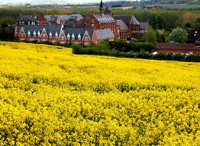 St Micheals Hospice Rape Seed Field Herefordshire